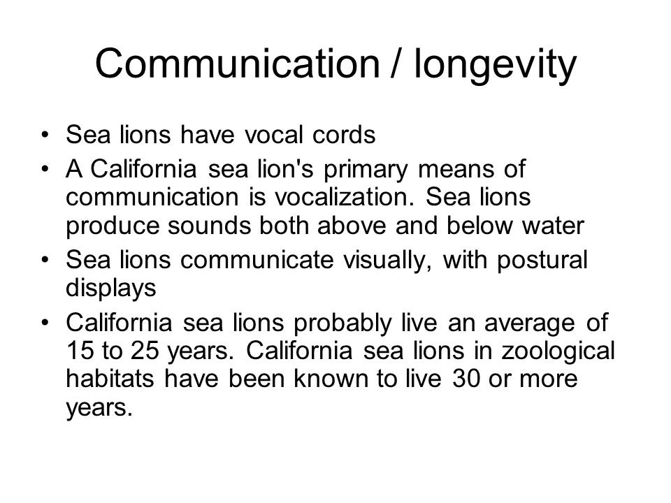 Communication / longevity Sea lions have vocal cords A California sea lion s primary means of communication is vocalization.