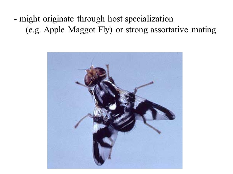 - might originate through host specialization (e.g. Apple Maggot Fly) or strong assortative mating