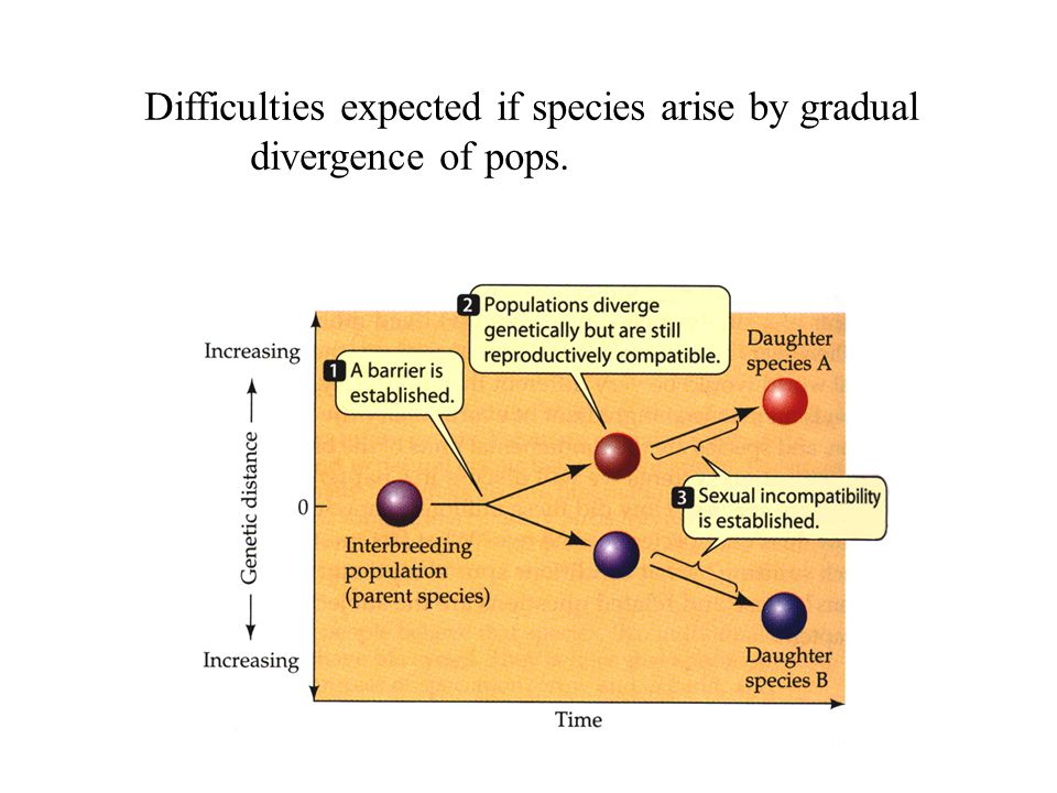 Difficulties expected if species arise by gradual divergence of pops.