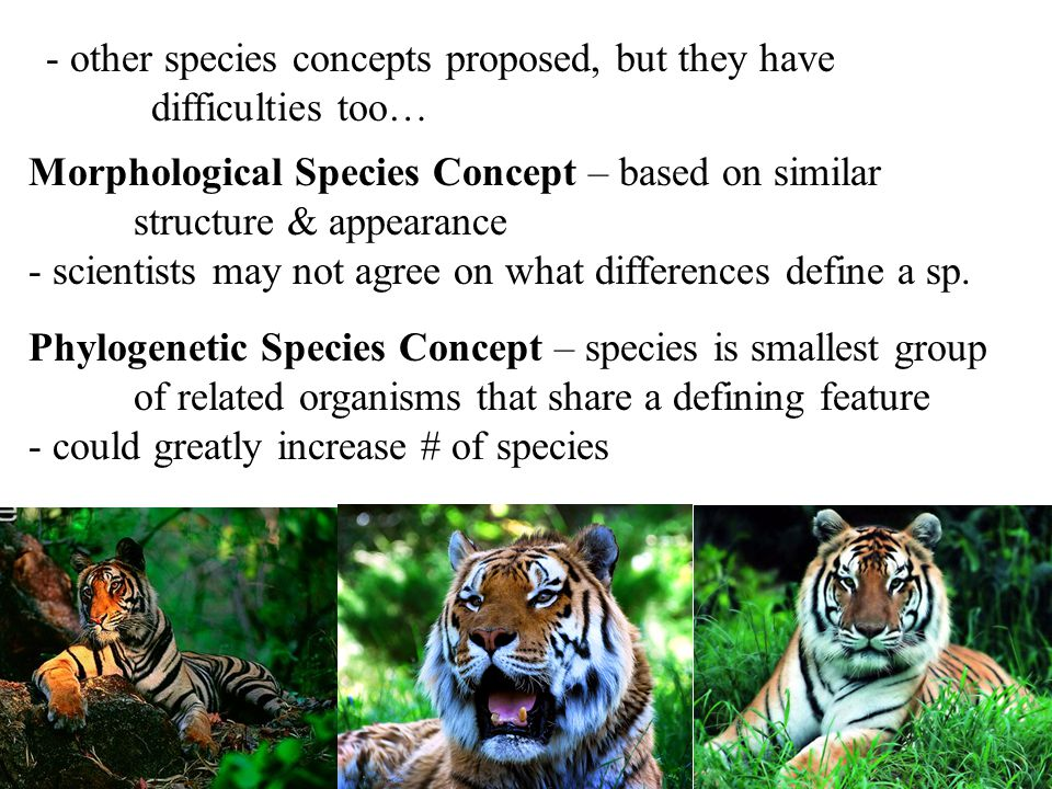 - other species concepts proposed, but they have difficulties too… Morphological Species Concept – based on similar structure & appearance - scientists may not agree on what differences define a sp.
