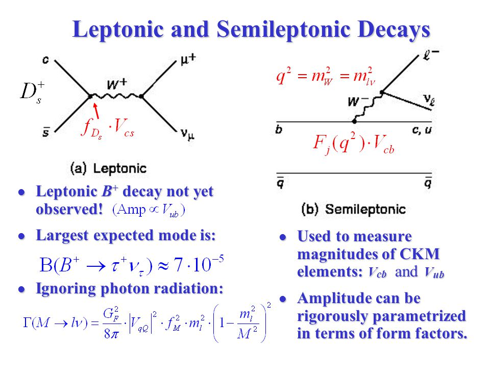 Leptonic and Semileptonic Decays Leptonic B + decay not yet observed.