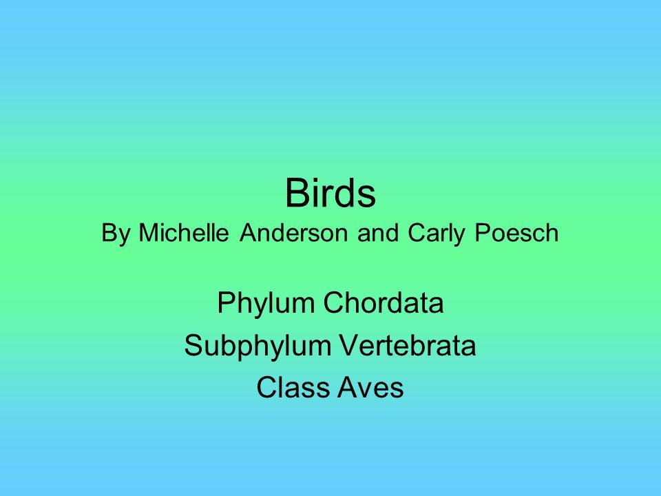 Circulatory System Birds have a closed circulatory system.