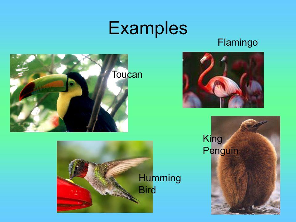 Examples Flamingo Toucan Humming Bird King Penguin