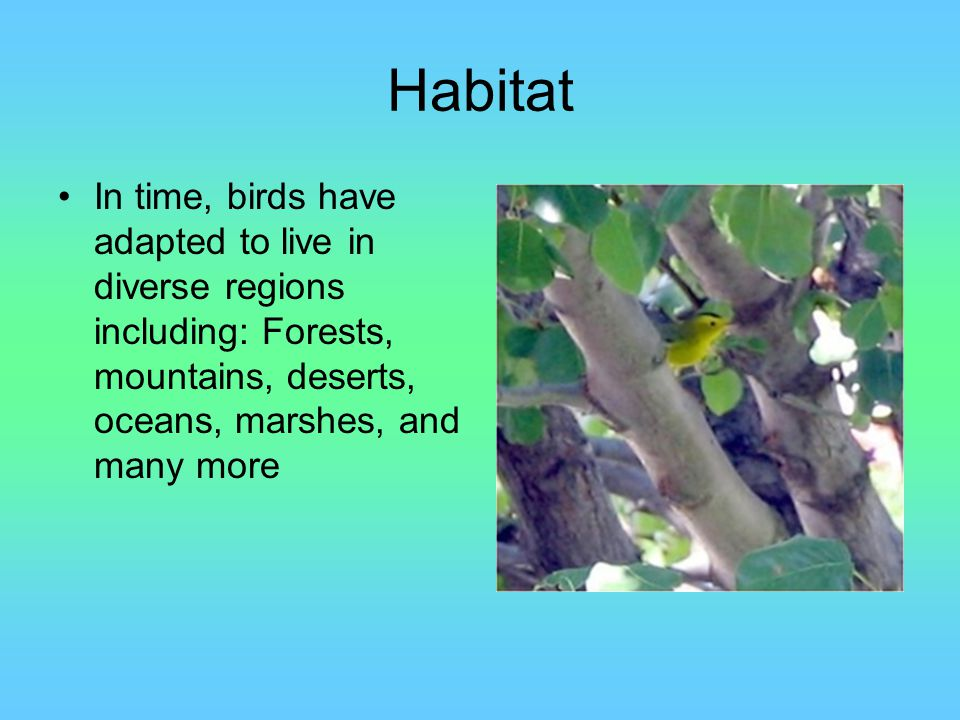 Habitat In time, birds have adapted to live in diverse regions including: Forests, mountains, deserts, oceans, marshes, and many more