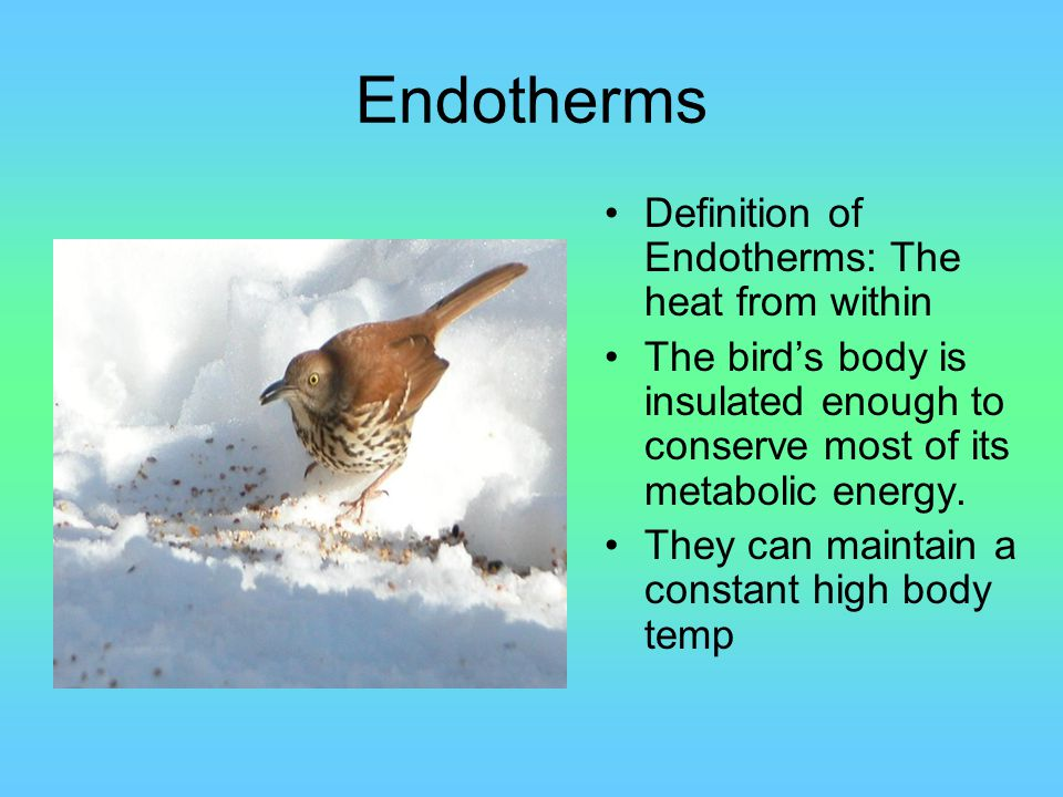 Endotherms Definition of Endotherms: The heat from within The bird's body is insulated enough to conserve most of its metabolic energy. They can maint