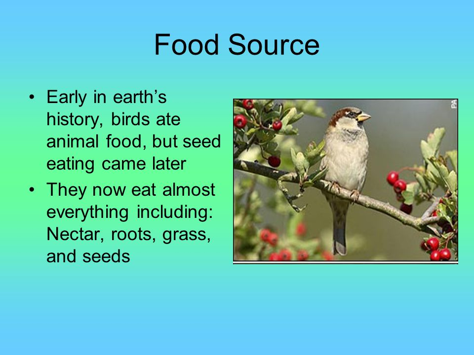 Importance to Humans and Environment Birds that eat other animals or, predator birds, have an important role in the food chain.