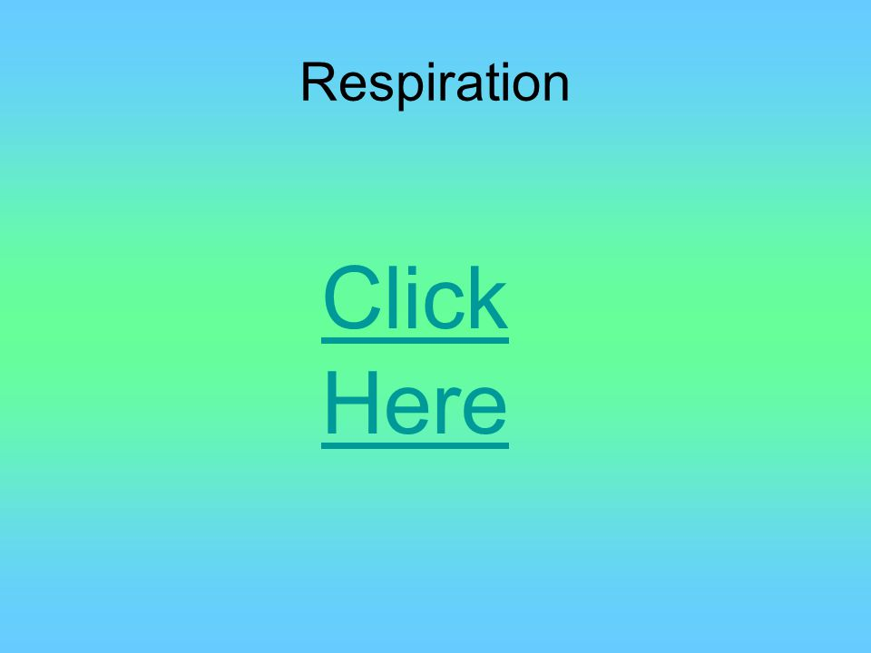 Respiration Birds need a steady stream of oxygen to fly, and to be able to release large amounts of CO2 The respiration cycle of a bird is much more effective than a mammals, transferring more air with each breath Basically, birds breath in and out at the same time