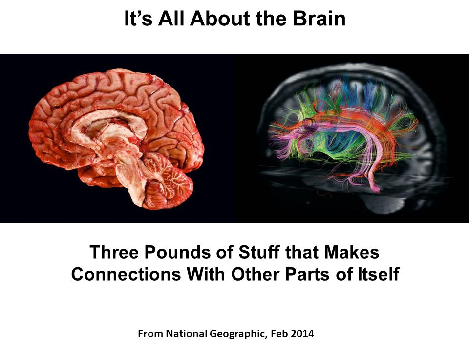 It's All About the Brain Three Pounds of Stuff that Makes Connections With Other Parts of Itself From National Geographic, Feb 2014