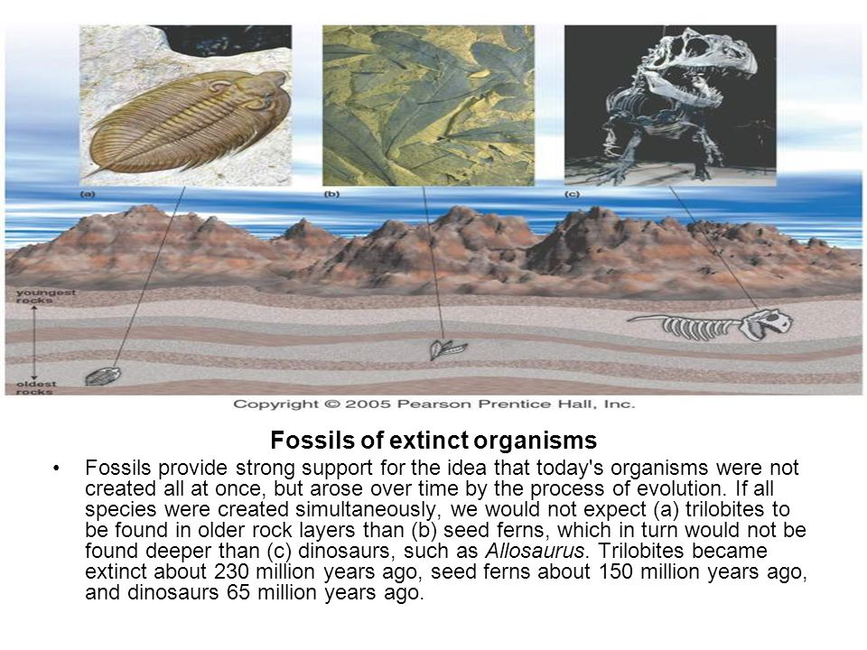 Fossils of extinct organisms Fossils provide strong support for the idea that today's organisms were not created all at once, but arose over time by t