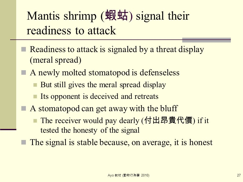 Ayo 教材 ( 動物行為學 2010) 27 Mantis shrimp ( 蝦蛄 ) signal their readiness to attack Readiness to attack is signaled by a threat display (meral spread) A new