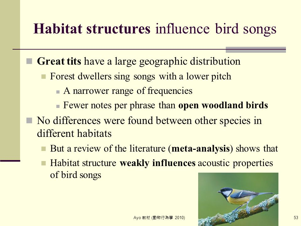 Ayo 教材 ( 動物行為學 2010) 53 Habitat structures influence bird songs Great tits have a large geographic distribution Forest dwellers sing songs with a lowe