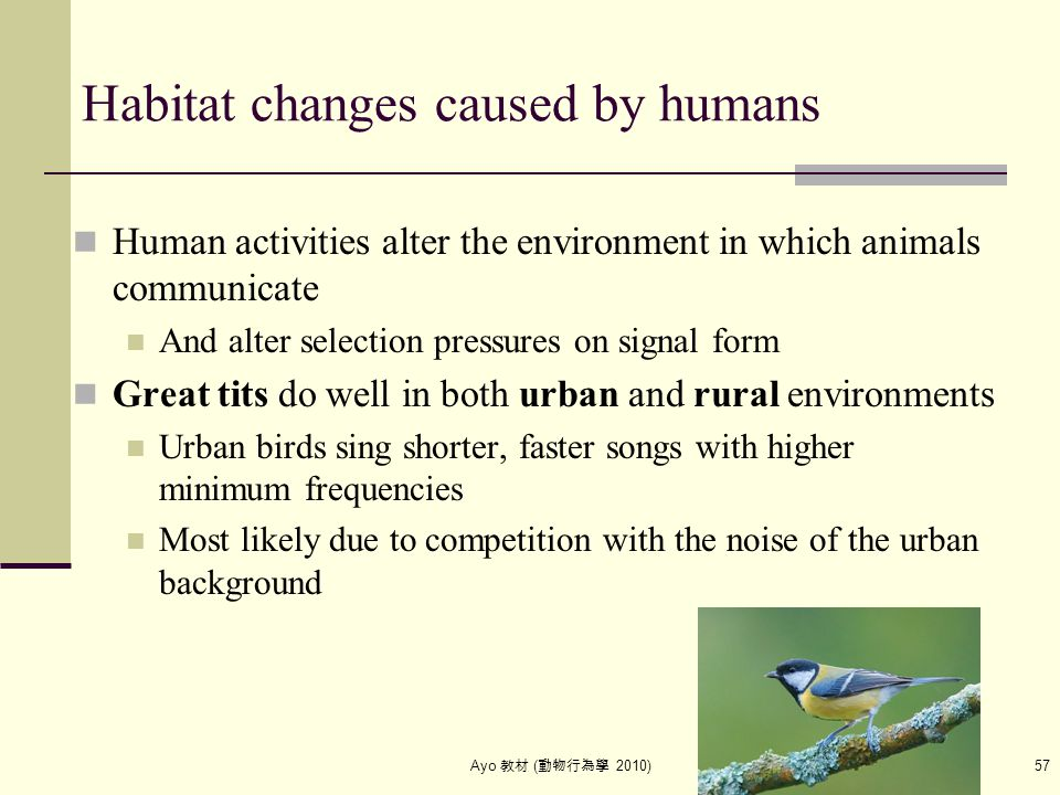Ayo 教材 ( 動物行為學 2010) 57 Habitat changes caused by humans Human activities alter the environment in which animals communicate And alter selection press
