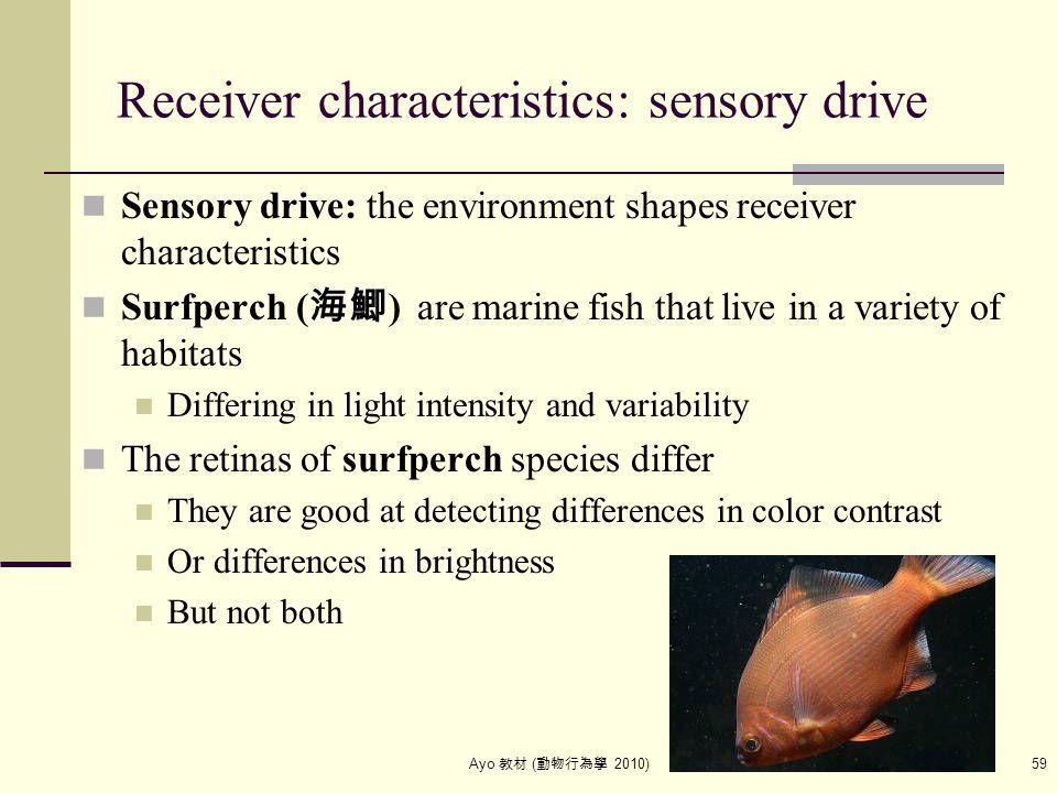 Ayo 教材 ( 動物行為學 2010) 59 Receiver characteristics: sensory drive Sensory drive: the environment shapes receiver characteristics Surfperch ( 海鯽 ) are ma