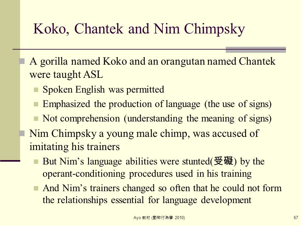 Ayo 教材 ( 動物行為學 2010) 67 Koko, Chantek and Nim Chimpsky A gorilla named Koko and an orangutan named Chantek were taught ASL Spoken English was permitte