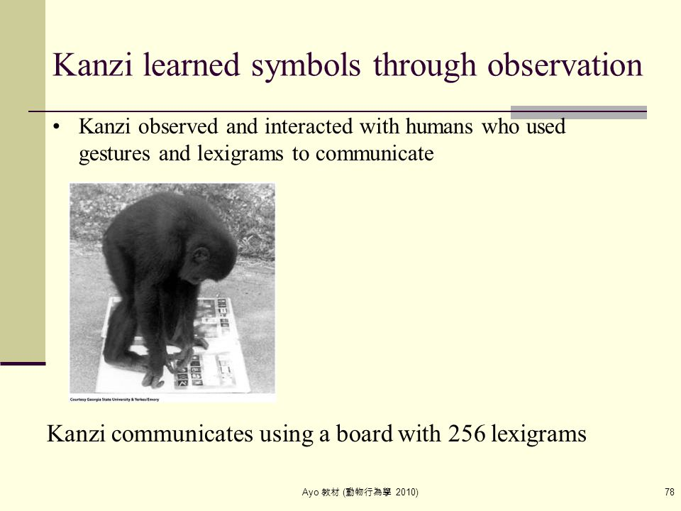 Ayo 教材 ( 動物行為學 2010) 78 Kanzi learned symbols through observation Kanzi communicates using a board with 256 lexigrams Kanzi observed and interacted wi