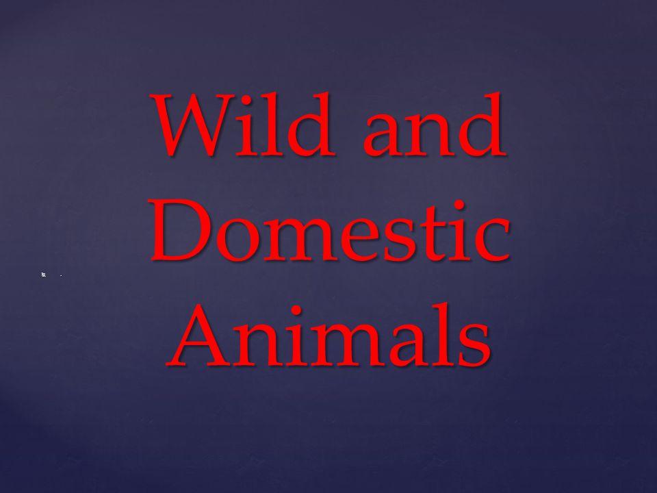 .... Wild and Domestic Animals