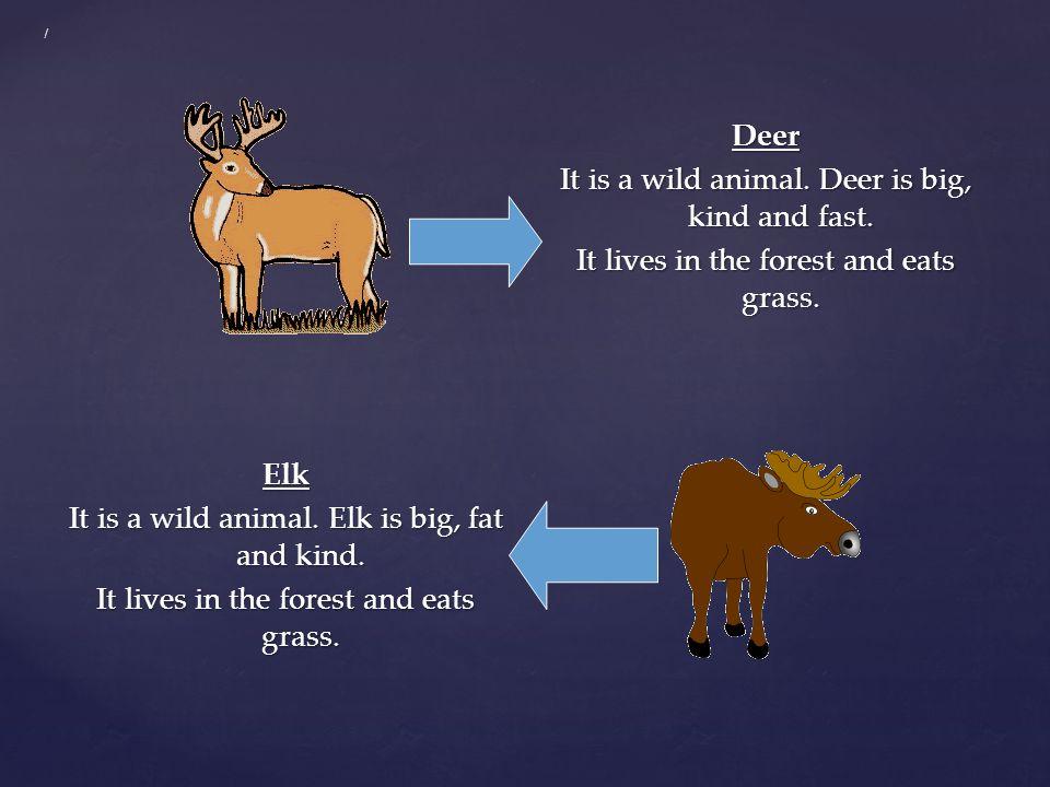 / Deer It is a wild animal.Deer is big, kind and fast.