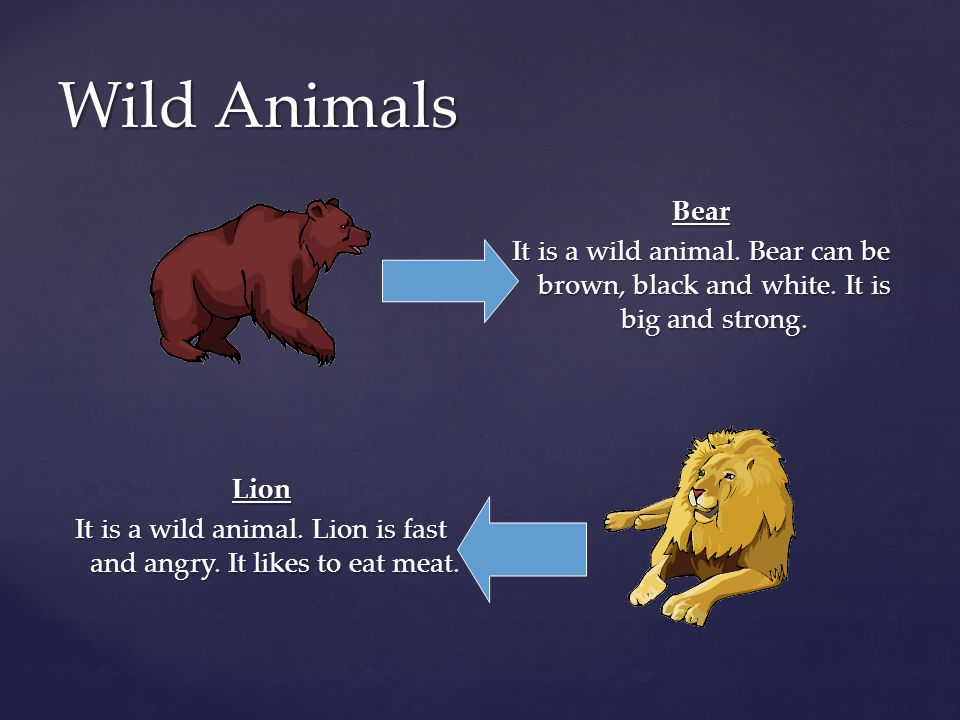 Wild Animals Bear It is a wild animal.Bear can be brown, black and white.