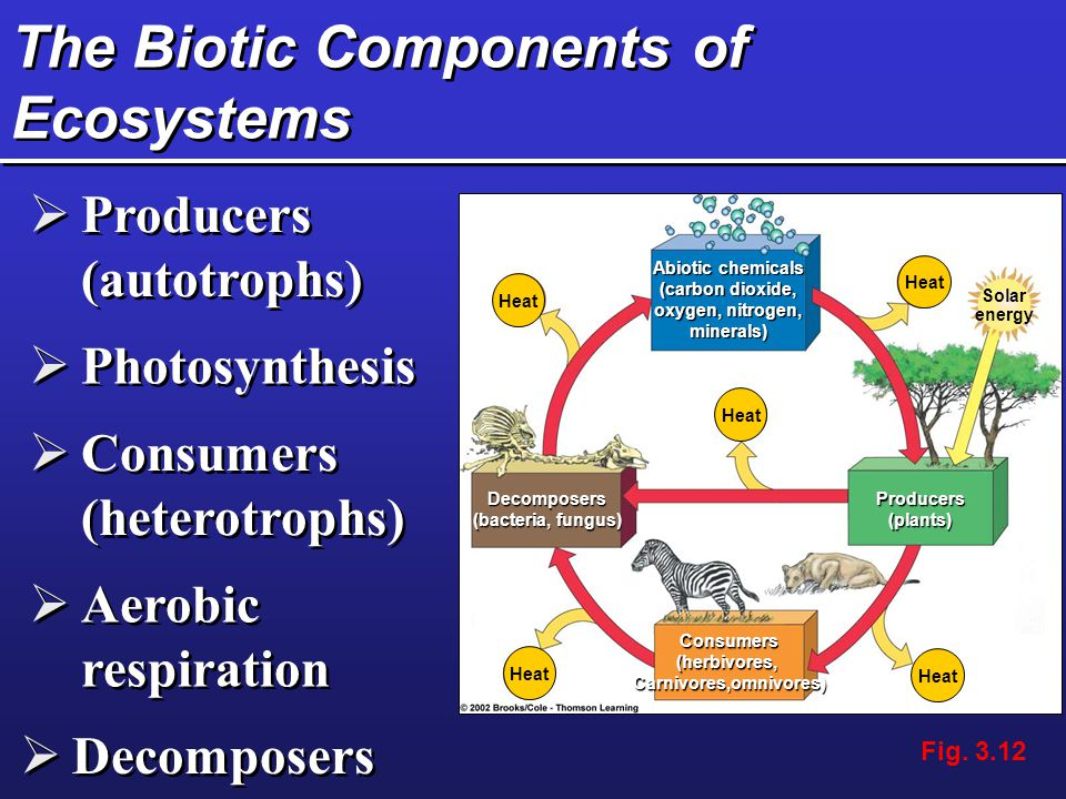 The Biotic Components of Ecosystems  Producers (autotrophs)  Photosynthesis  Consumers (heterotrophs)  Aerobic respiration  Decomposers Heat Abio