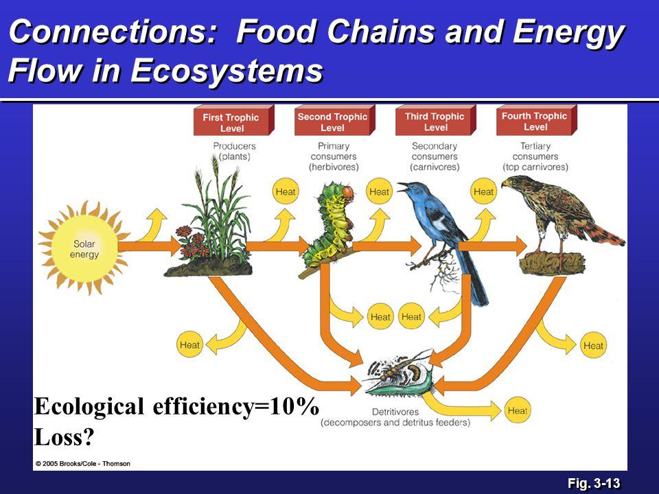 Connections: Food Chains and Energy Flow in Ecosystems Fig. 3-13 Ecological efficiency=10% Loss?