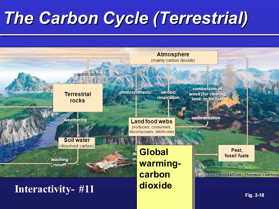 The Carbon Cycle (Terrestrial) photosynthesis aerobic respiration Terrestrial rocks Soil water (dissolved carbon) Land food webs producers, consumers,