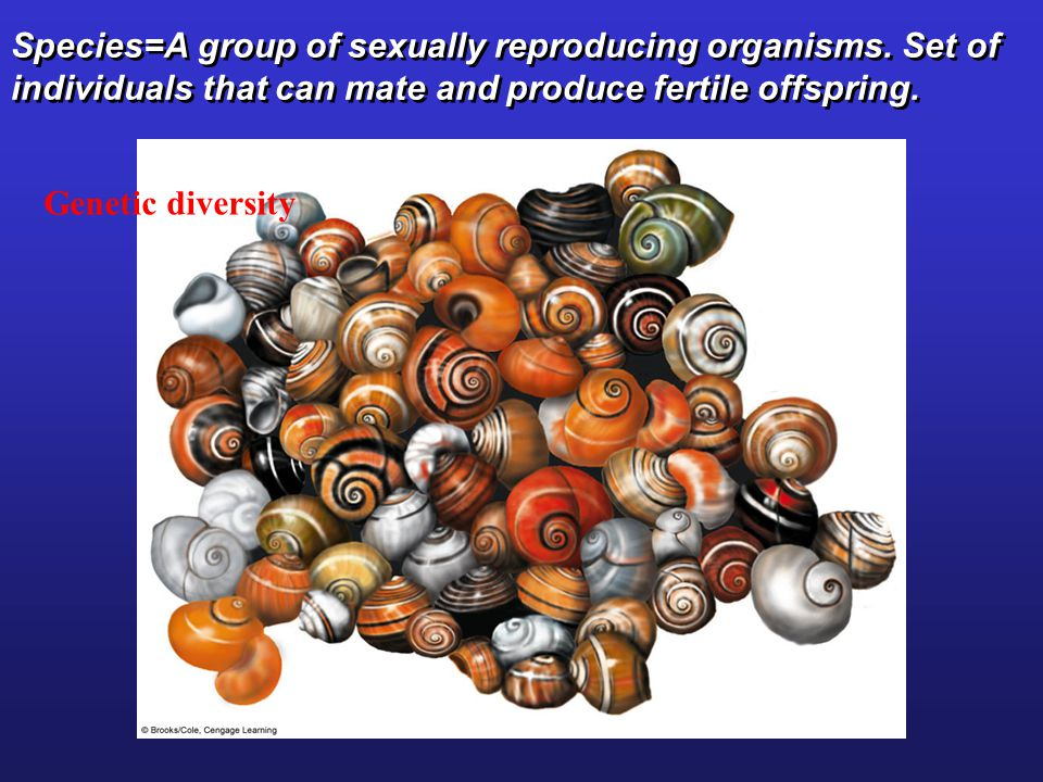 Species=A group of sexually reproducing organisms. Set of individuals that can mate and produce fertile offspring. Genetic diversity