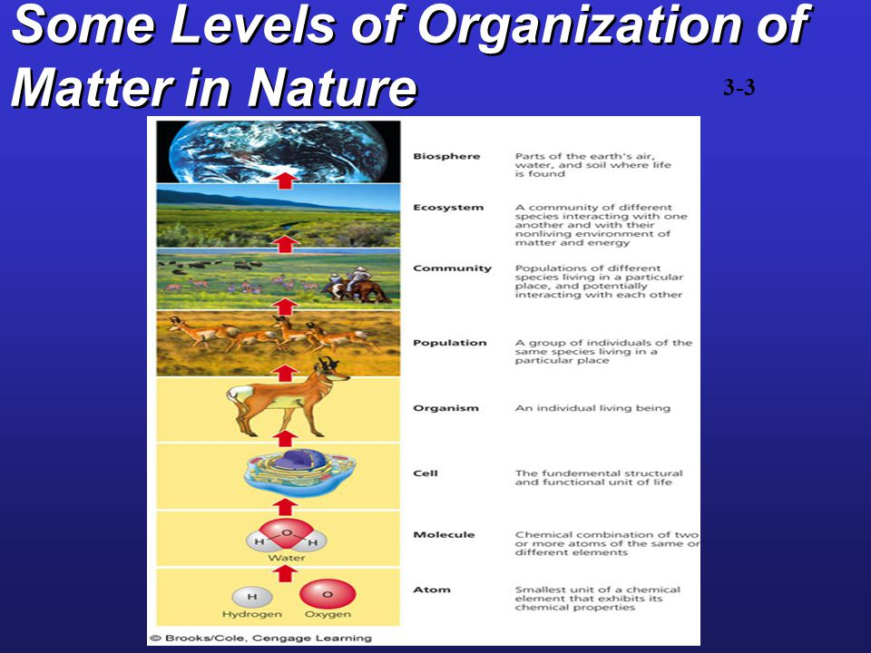 Population, community, ecosystem?