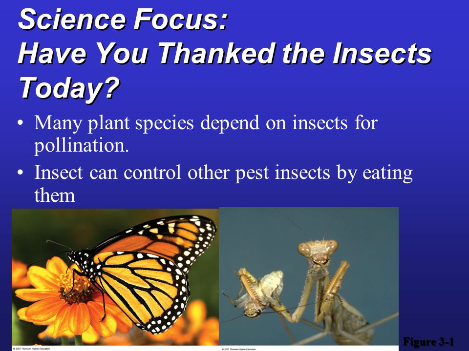 Science Focus: Have You Thanked the Insects Today? Many plant species depend on insects for pollination. Insect can control other pest insects by eati