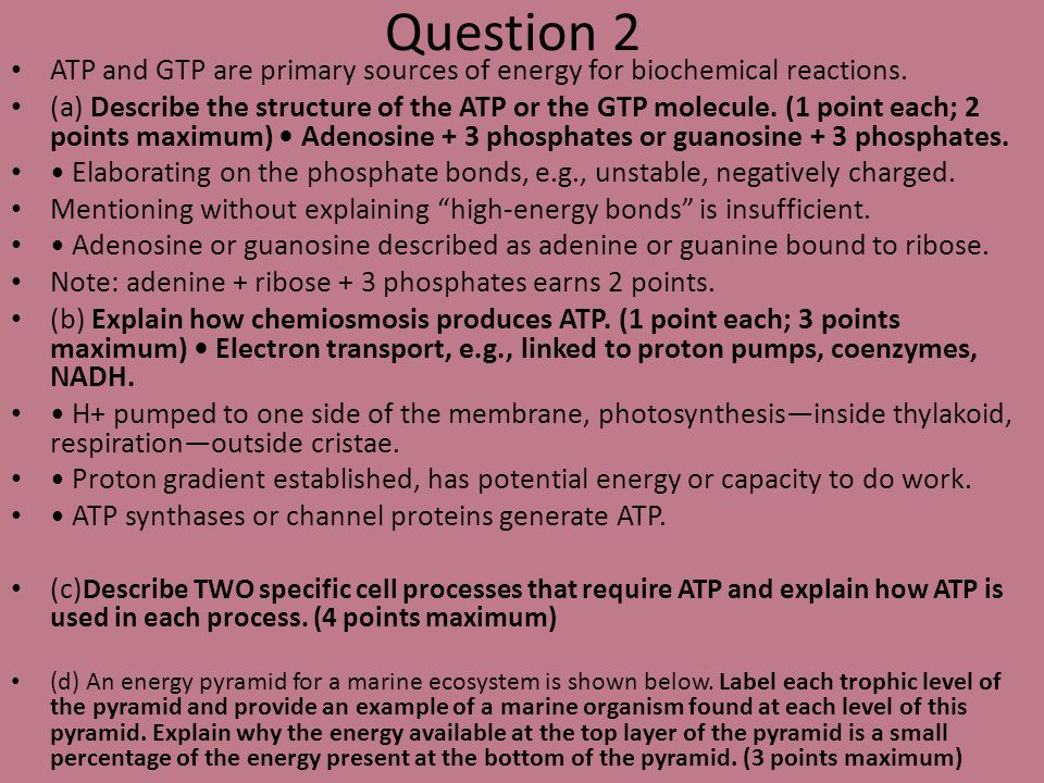 Question 2 ATP and GTP are primary sources of energy for biochemical reactions. (a) Describe the structure of the ATP or the GTP molecule. (1 point ea
