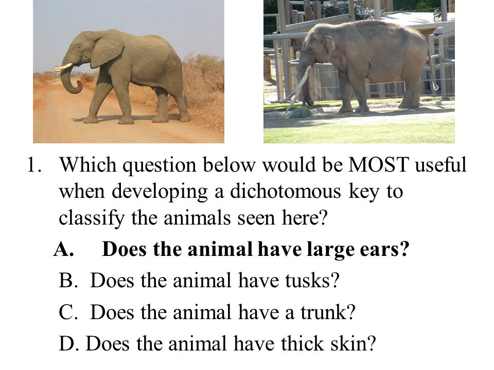 1.Which question below would be MOST useful when developing a dichotomous key to classify the animals seen here.