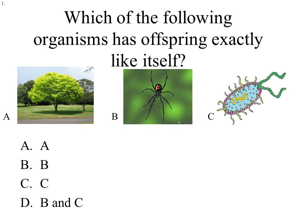 Which of the following organisms has offspring exactly like itself A.A B.B C.C D.B and C 1. ABC