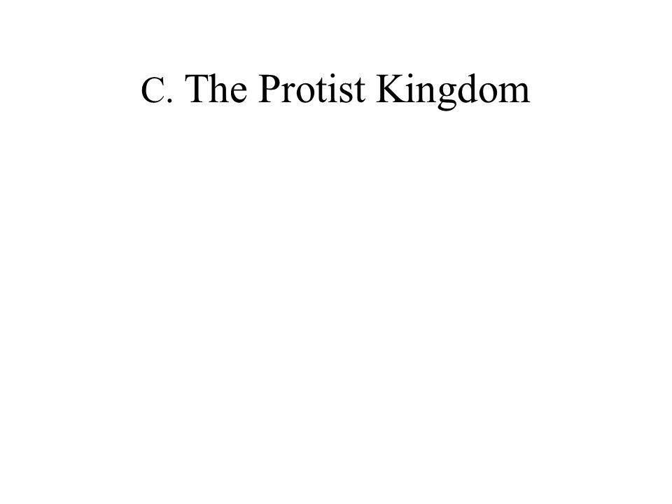 C. The Protist Kingdom