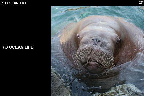 37 7.3 OCEAN LIFE
