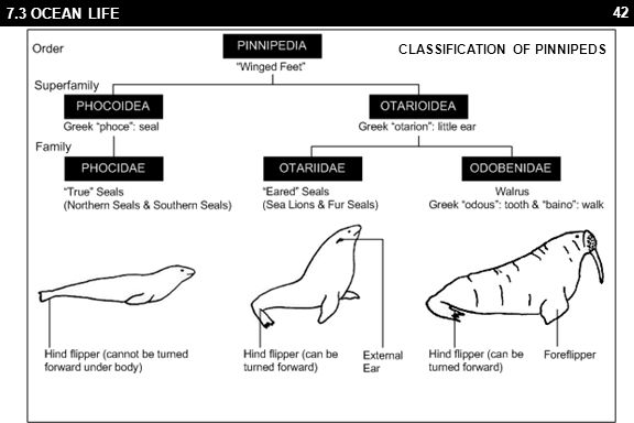 42 7.3 OCEAN LIFE CLASSIFICATION OF PINNIPEDS
