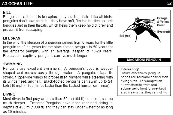 52 7.3 OCEAN LIFE BILL Penguins use their bills to capture prey, such as fish.
