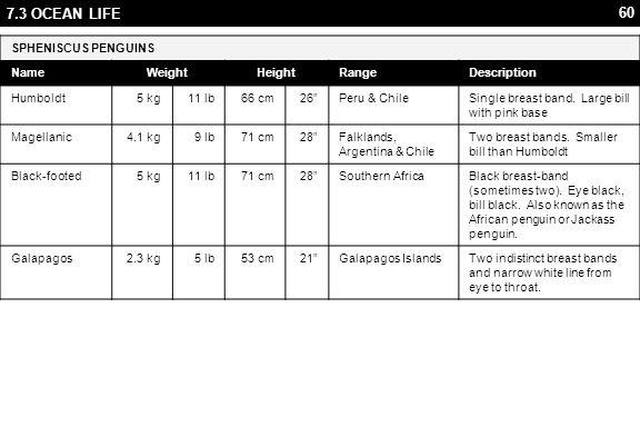 60 7.3 OCEAN LIFE SPHENISCUS PENGUINS NameWeightHeightRangeDescription Humboldt5 kg11 lb66 cm26 Peru & ChileSingle breast band.