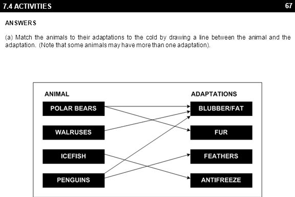 67 7.4 ACTIVITIES ANSWERS (a) Match the animals to their adaptations to the cold by drawing a line between the animal and the adaptation.