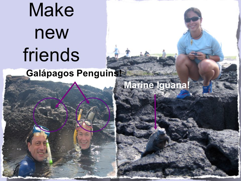 Make new friends Galápagos Penguins! Marine Iguana!