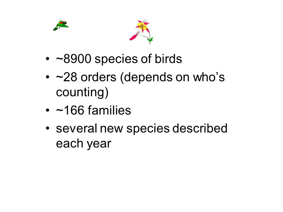 ~8900 species of birds ~28 orders (depends on who's counting) ~166 families several new species described each year