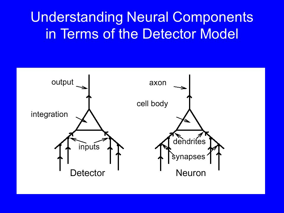 Understanding Neural Components in Terms of the Detector Model
