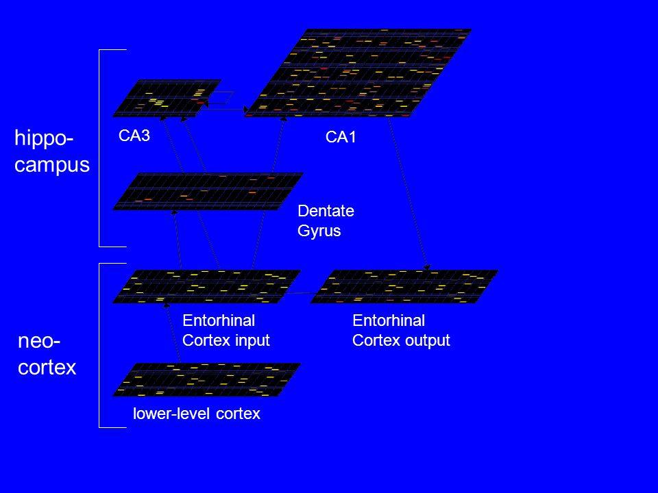 CA3 CA1 Dentate Gyrus Entorhinal Cortex input Entorhinal Cortex output lower-level cortex hippo- campus neo- cortex