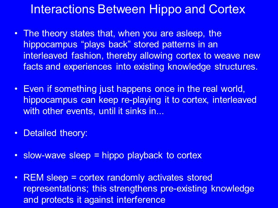 Interactions Between Hippo and Cortex The theory states that, when you are asleep, the hippocampus plays back stored patterns in an interleaved fashion, thereby allowing cortex to weave new facts and experiences into existing knowledge structures.