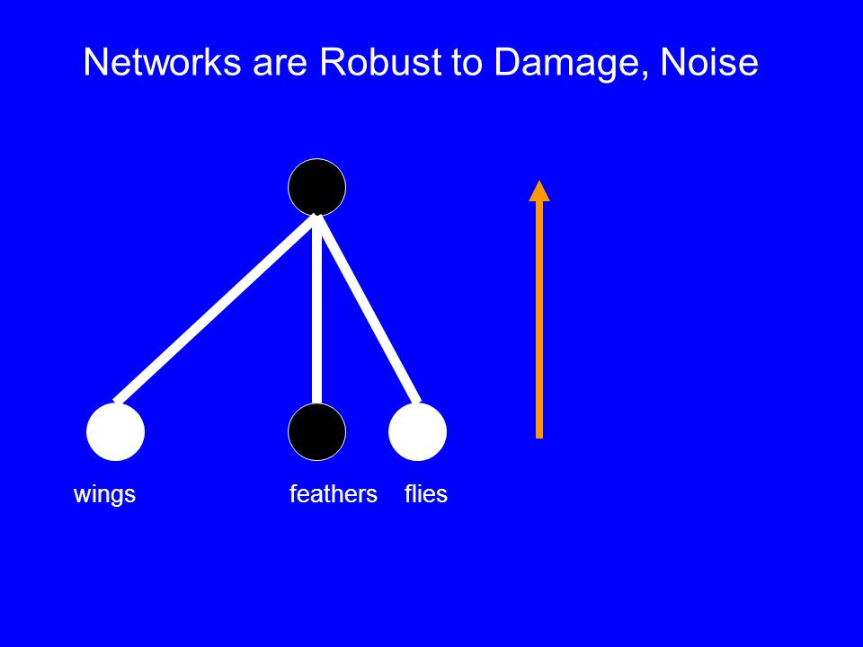 wingsfeathers flies Networks are Robust to Damage, Noise