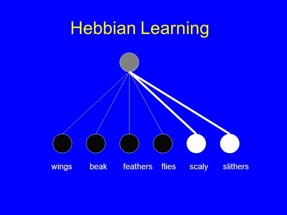 Hebbian Learning scalyslithers wingsbeakfeathers flies