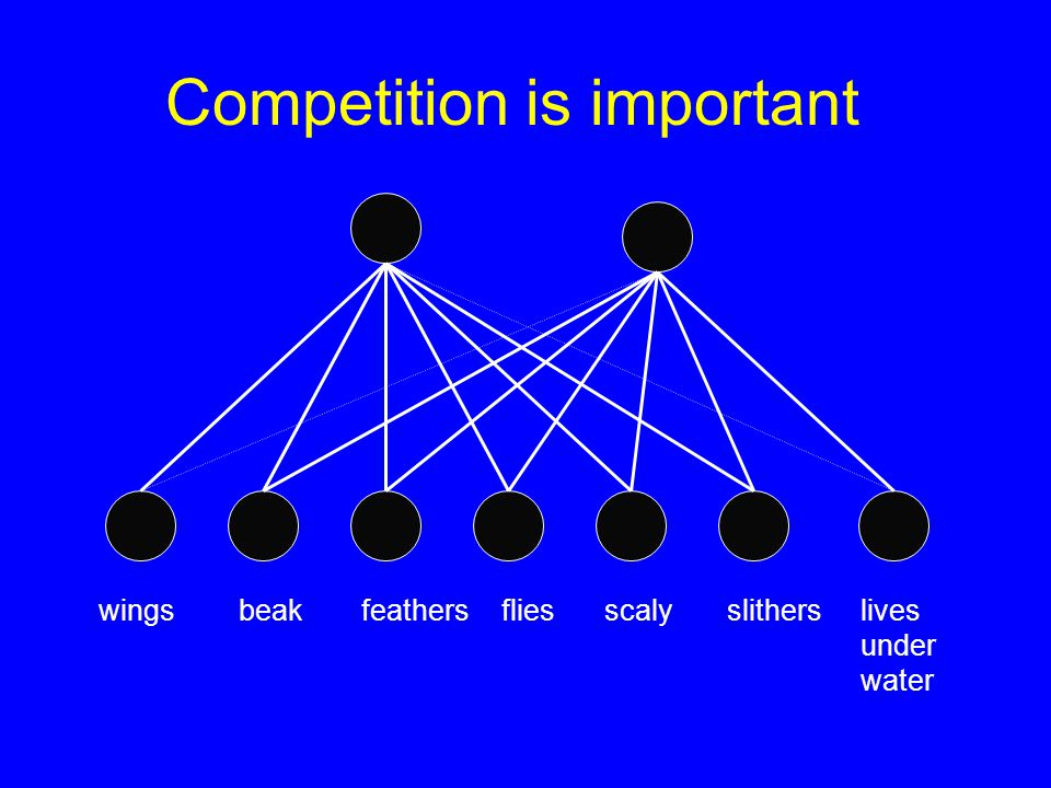 Competition is important lives under water scalyslithers wingsbeakfeathers flies