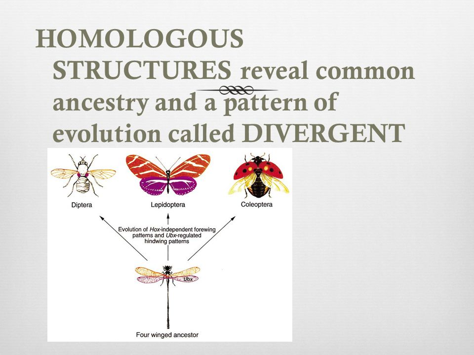 HOMOLOGOUS STRUCTURES reveal common ancestry and a pattern of evolution called DIVERGENT EVOLUTION.