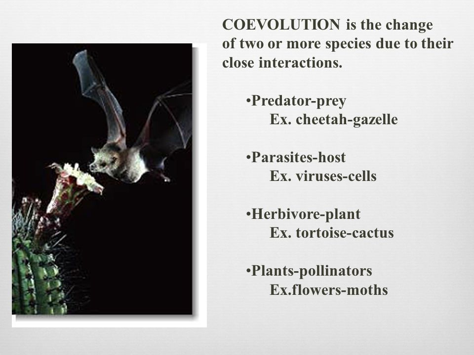 COEVOLUTION is the change of two or more species due to their close interactions. Predator-prey Ex. cheetah-gazelle Parasites-host Ex. viruses-cells H