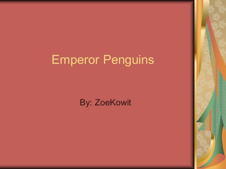 By: ZoeKowit Emperor Penguins