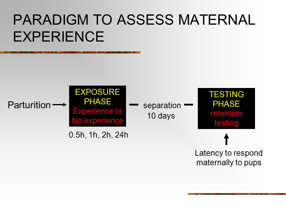 Postpartum Experience Soon after the parturition the hormones that initiated the onset of maternal behavior begin to decrease So what maintains the maternal responsiveness.