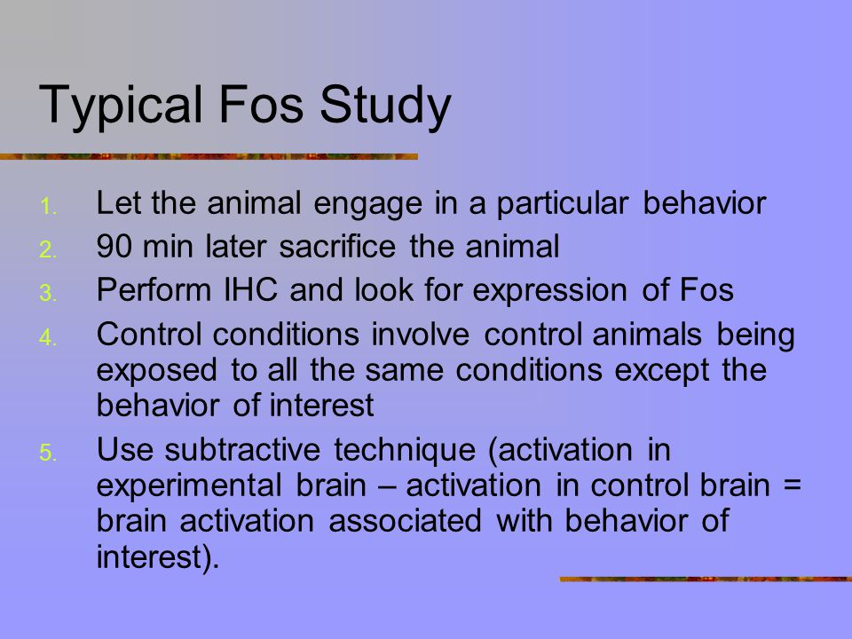 Further Evidence for Involvement of MPOA in Maternal Behavior Looking at activation of brain areas (cells) associated with maternal behavior Looking at activation  looking at expression of proteins produced by immediate early genes (IEG) (e.g., c-fos gene produces protein called Fos) Fos protein peaks 1-2 after cells have been active Immunohistochemisty (IHC) – labeling Fos protein using antibodies
